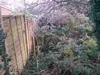We are experts at clearing gardens